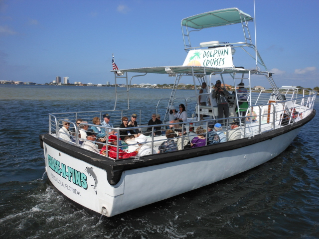 Dolphin cruise on the Chase-N-Fins